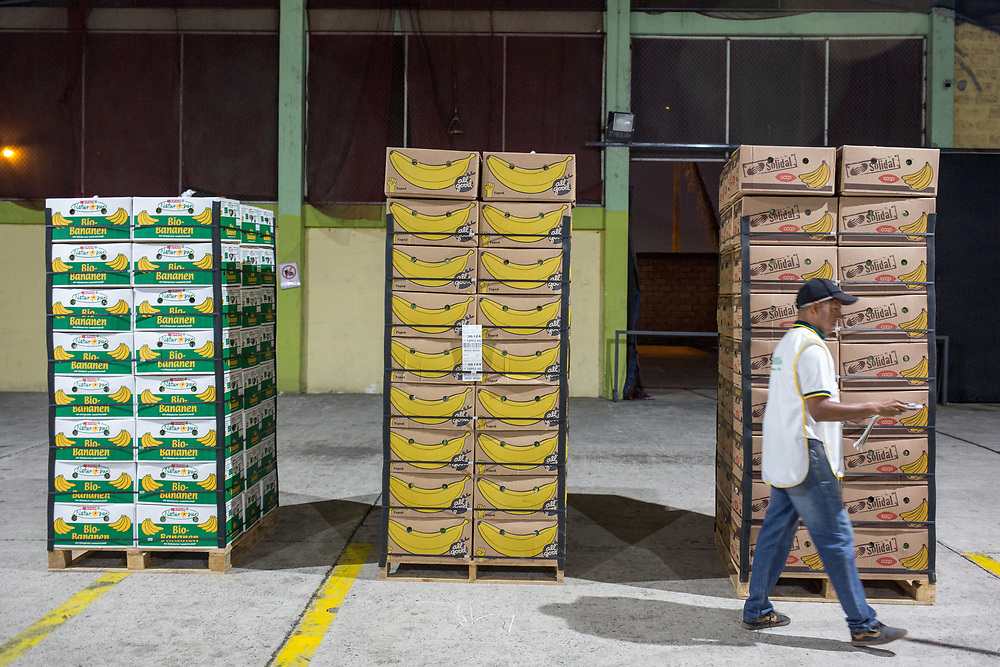 In the ASOGUABO shipping warehouse in El Guabo, shipments of banana boxes arrive from the farms and are repacked for shipping, this requires extra packaging and securing the stacks of boxes ready for the ships at Machala. Machala is known as the banana capital of the world.<br /> <br /> Differnt boxes are used for different clients, with their own branding.