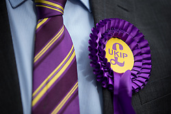 © Licensed to London News Pictures . 05/06/2014 . Newark , Nottinghamshire , UK . UKIP supporter with matching Rosette and tie in Newark today (Thursday 5th June 2014) as voting takes place in the Newark by-election , following the resignation of incumbent Patrick Mercer . Photo credit : Joel Goodman/LNP