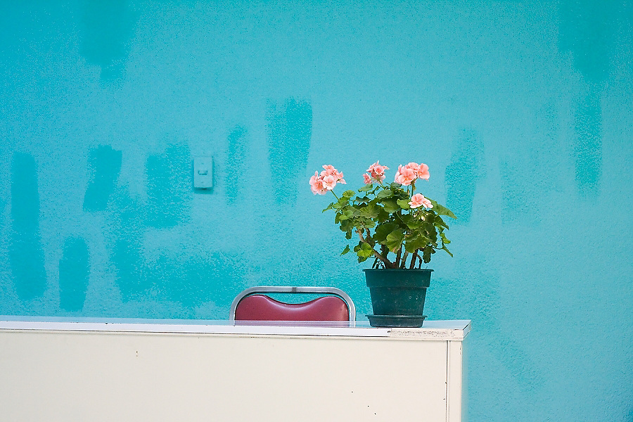 Potted flowers stand on a desk in an empty office in Mexico City, Mexico on June 17, 2008.