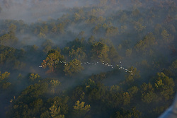 Stock photo of an aerial view of East Texas wildfires with a flock of birds flying below