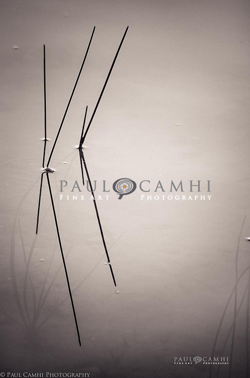 Limited edition Fine Art Photography, pigment ink giclée print, dated and signed photography for decoration