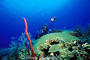 diver photographs giant brain coral, Colpophyllia sp., and <br /> red row pore rope sponge, Aplysina cauliformis,<br /> Grand Cayman Island ( Caribbean Sea )   MR 202