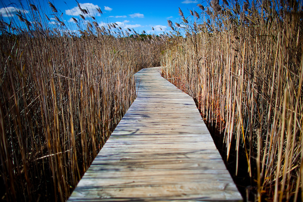 A long boardwalk through the reeds and rushes at Sandy Hook National Park New Jersey.  The walkway leads to the Nike Pond bird blind.