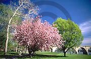 Harrisburg, PA, Riverfront Park, Flowering Spring Trees, Susquehanna River