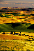 Image of wheatfields in the Palouse, eastern Washington, Pacific Northwest by Randy Wells
