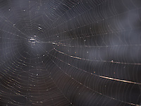 Spider Web on a Lava Beach. Big Island, Hawaii. Image taken with a Nikon D2xs and 105 mm f/2.8 macro lens (ISO 100, 105 mm, f/3, 1/60 sec).