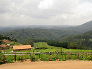 Rwanda - Tea plantations are a common sight along both main entries into the Nyungwe National Forest in southern Rwanda.