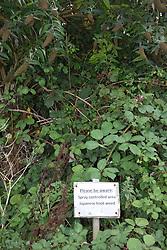 Japanese knot weed spraying warning sign, Cornwall UK
