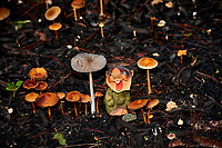 Troll in with the mushrooms. Image taken with a Fuji X-H1 camera and 80 mm f/2.8 OIS macro lens