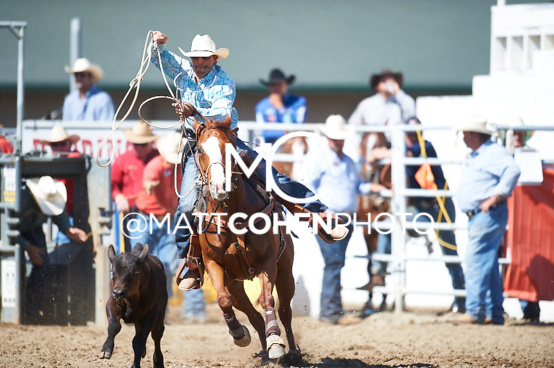 Tie-down roper Marshall Leonard of Shongaloo, LA competes at the Redding Rodeo in Redding, CA<br /> <br /> <br /> UNEDITED LOW-RES PREVIEW<br /> <br /> <br /> File shown may be an unedited low resolution version used as a proof only. All prints are 100% guaranteed for quality. Sizes 8x10+ come with a version for personal social media. I am currently not selling downloads for commercial/brand use.