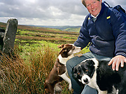 Hill farmer, George Allison gathering sheep up on the North York Moors in Bilsdale, North Yorkshire, UK