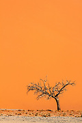 Sand dune with lone tree, Sossusvlei desert, Namib-Naukluft National Park, Namibia.