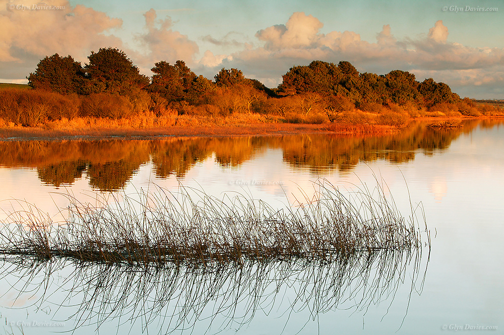 Mirror like lake surface at sunset at Llyn Alaw in North Anglesey.