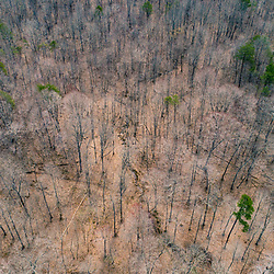 The forest in the Hughes River Wildlife Management Area near Walker, West Virginia. Spring.