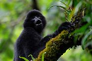 Wuliangshan - Gibbon rainforest