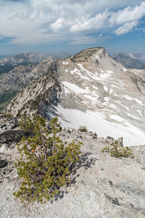 Whitebark pine trees on a ridge in Oregon's Wallowa Mountains.