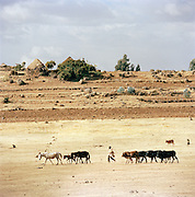 Farmer hearding cattle in the Omo Valley, in Southern Ethiopia