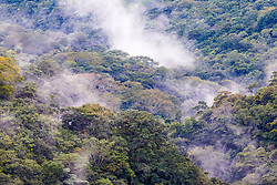 Mists in cloud forest near Monteverde Cloud Forest Preserve, Costa Rica.