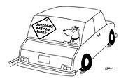 """(Dog in car with """"Surrogate Baby on Board"""" notice)"""