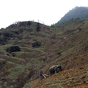 A man ploughs terraced files with his water buffalo near Sapa, Vietnam. Sapa and the surrounding highlands are close to the Chinese border in Northern Vietnam and is inhabited by highland minorities including Hmong and Dzao groups. Sapa is now a thriving tourist destination for travelers taking the night train from Hanoi. Sapa, Vietnam. 16th March 2012. Photo Tim Clayton