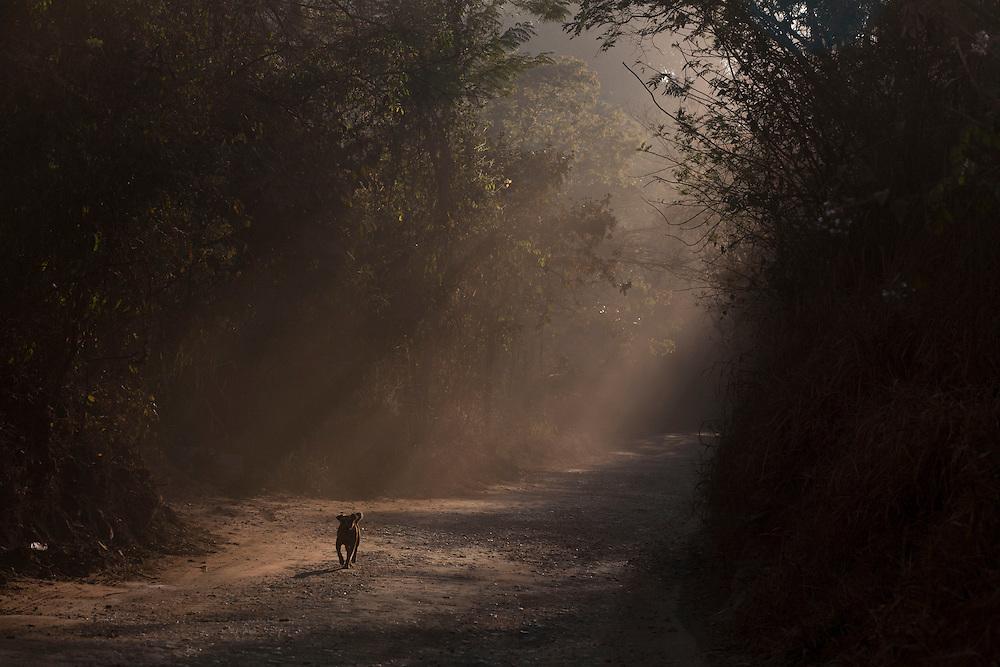 Sabara_MG, Brazil.<br /> <br /> Na foto, cachorro em estrada de terra em Sabara, Minas Gerais.<br /> <br /> Dog in dirt road in Sabara, Minas Gerais.<br /> <br /> Foto: LEO DRUMOND / NITRO