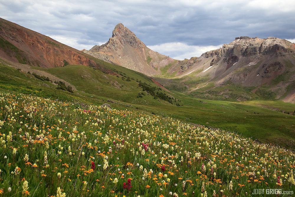 Wildflowers lie in a basin west of Wetterhorn Peak in the San Juan mountains.