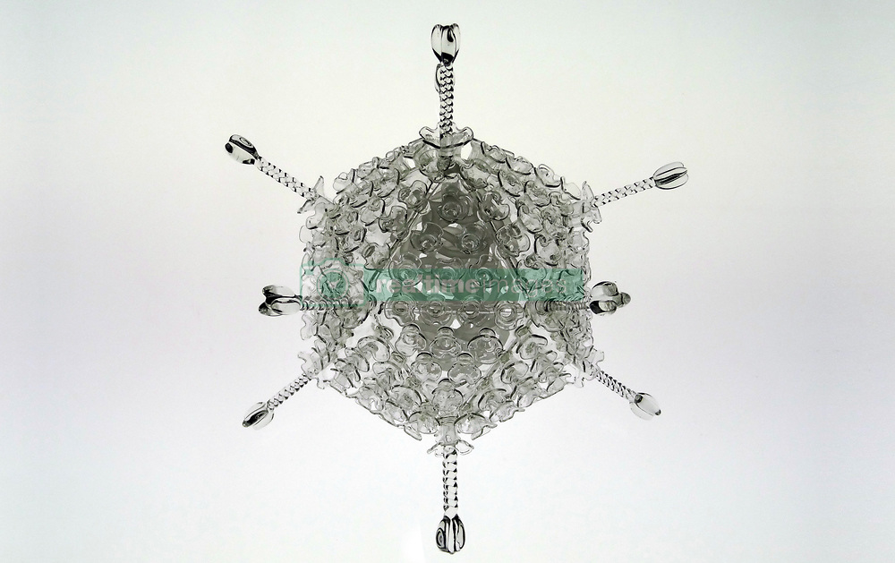 """IN PHOTO: Adeno<br /> <br /> Internationally-renowned British artist Luke Jerram has created a coronavirus glass sculpture in tribute to the huge global scientific and medical effort to combat the pandemic.<br /> <br /> Made in glass, at 23cm in diameter, it is 1 million times larger than the actual virus. <br /> <br /> It was commissioned 5 weeks ago by a university in America to reflect its current and future research and learning in health, the environment and intelligent systems, and its focus on solving global challenges.  <br /> <br /> Luke says: """"Helping to communicate the form of the virus to the public, the artwork has been created as an alternative representation to the artificially coloured imagery received through the media. In fact, viruses have no colour as they are smaller than the wavelength of light."""" <br /> <br /> """"This artwork is a tribute to the scientists and medical teams who are working collaboratively across the world to try to slow the spread of the virus. It is vital we attempt to slow the spread of coronavirus by working together globally, so our health services can manage this pandemic."""" <br /> <br /> Made through a process of scientific glassblowing, the coronavirus model is based on the latest scientific understanding and diagrams of the virus.  <br /> <br /> Profits from this glass model are going to Médecins Sans Frontières (MSF) who will be assisting developing countries deal with the fallout of the coronavirus epidemic. <br /> <br /> This new model is just the latest in Luke's Glass Microbiology series of virus sculptures. Luke and his glassblowing team have, in the past, made other sculptures of viruses from swine flu and Ebola to smallpox and HIV.<br /> <br /> Respected in the scientific community, the glass sculptures have featured inThe Lancet,Scientific American,British Medical Journal (BMJ)and on the front cover ofNature Magazine.  <br /> <br /> TheGlass Microbiologysculptures are in museum collections around the world, includ"""