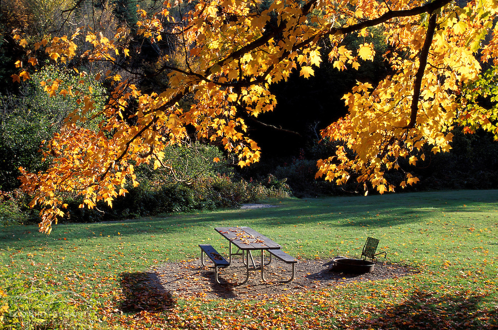 Fall Foliage. Cohos Trail.  Zealand Campground.  Twin Mtn.  White Mountain N.F., NH