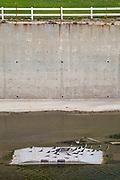 Black Neck Stilts in Los Angeles River, Studio City, Los Angeles, California, USA