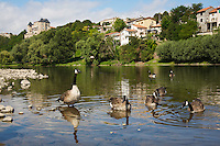 Canada Geese (Branta canadensis), group at the banks of the river Allier with the Mayor'S House and city in the background. Pont-du-Chateau, Auvergne, France.
