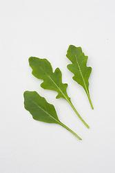 Salad rocket - Arugula
