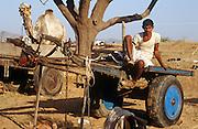 A camel trader sitting on his cart at the Pushkar Fair, Rajasthan, India