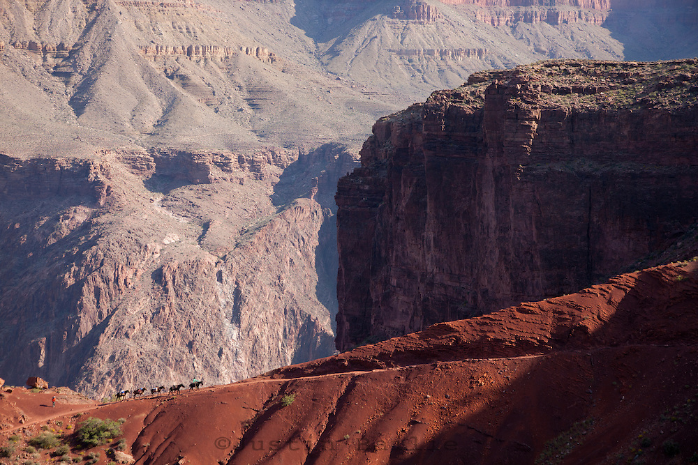Pack mules on the South Kaibab Trail. Grand Canyon National Park, AZ.