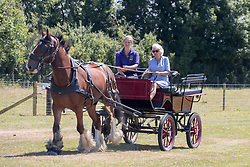 The Duchess of Cornwall is taken for a carriage ride as she visits Dyfed Shire Horse Farm in Eglwyswrw in Pembrokeshire, Wales.