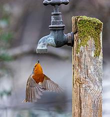 Garden Birds get a drink, Oban, 5 February 2021