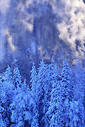 Snow-covered Pines and Mist after Storm, and El Capitan, Yosemite National Park, California