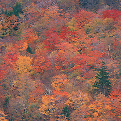 Acadia NP, ME. Northern Hardwood Forest Fall Foliage From the South Bubble.