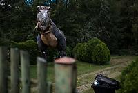 Gredele, woj. podlaskie, 29.09.2018. Gredele kolo Bielska Podlaskiego to rodzinna wies Zenka Martyniuka, najbardziej znanego w Polsce wykonwacy muzyki disco-polo N/z gipsowe dinozaury na jednej z posesji fot Michal Kosc / AGENCJA WSCHOD