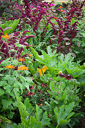 Amaranthus paniculatus 'Red Fox' with Tithonia rotundifolia 'Torch', Rudbeckia hirta 'Cherry Brandy' (Coneflower), Courgette 'Green Bush' and red stemmed Ruby Chard