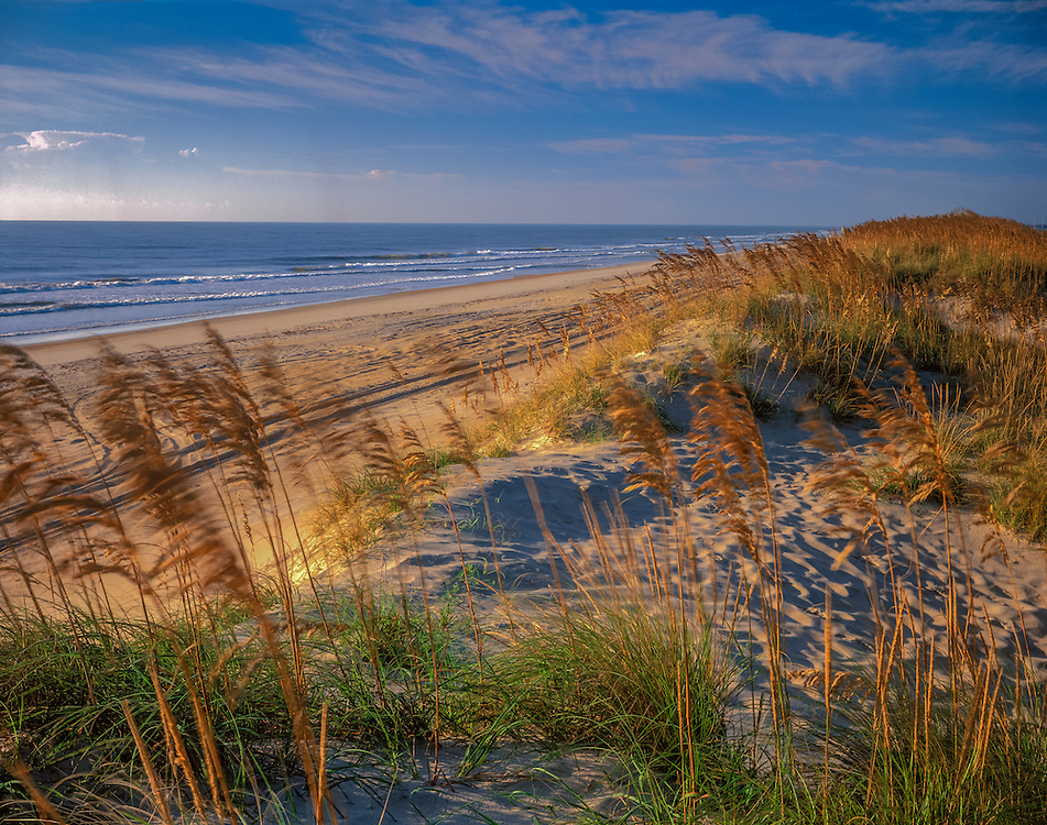 Beach and surf, Sea Oats growing on primary dune, Pea Island National Wildlife Refuge, NC