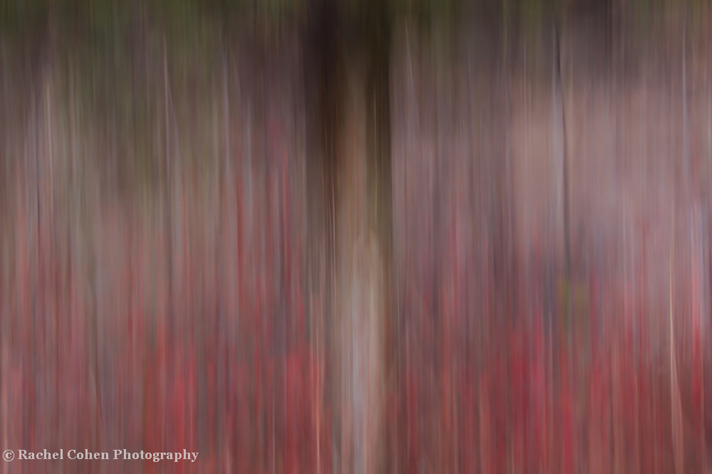 """""""Realm of Understanding""""<br /> <br /> A wonderful vertical lined abstract image!!Let your imagination take you away!!<br /> <br /> Nature Abstracts by Rachel Cohen"""