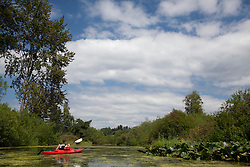 North America, United States, Washington, Bellevue, teenage boy kayaking in Mercer Slough Nature Park.