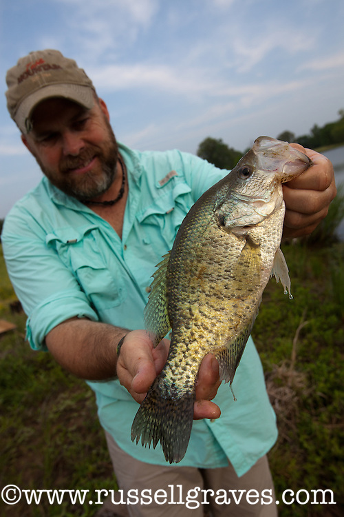 ANGLER SHOWING OFF A CRAPPIE HE CAUGHT FROM A FARM POND