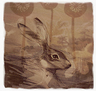 Close up of Hare