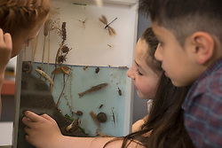 Students studying about pond life in a display cabinet, Fürstenfeldbruck, Bavaria, Germany