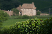 South Tyrolean vineyard agriculture and distant farm, South Tyrol.