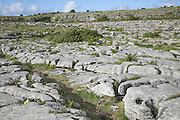 Carboniferous limestone rocky surface with clints and grykes, the Burren, County Clare, Ireland