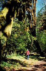 Washington: Olympic National Park. Hoh Rain Forest..Photo copyright Lee Foster, www.fostertravel.com..Photo #: waolym103, 510/549-2202, lee@fostertravel.com