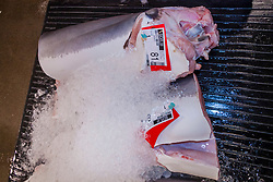 mako shark meat, Isurus sp., and other locally caught fish on pallets on the auction floor, Honolulu Fish Auction by United Fishing Agency, the only fresh tuna auction in the US, up to 160,000 pounds of fish can be auctioned in a day, Pier 38, Commercial Fishing Village, Honolulu, Oahu, Hawaii, USA