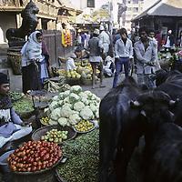 NEPAL, Kathmandu. Water buffalo herd passing through vegetable bazaar.